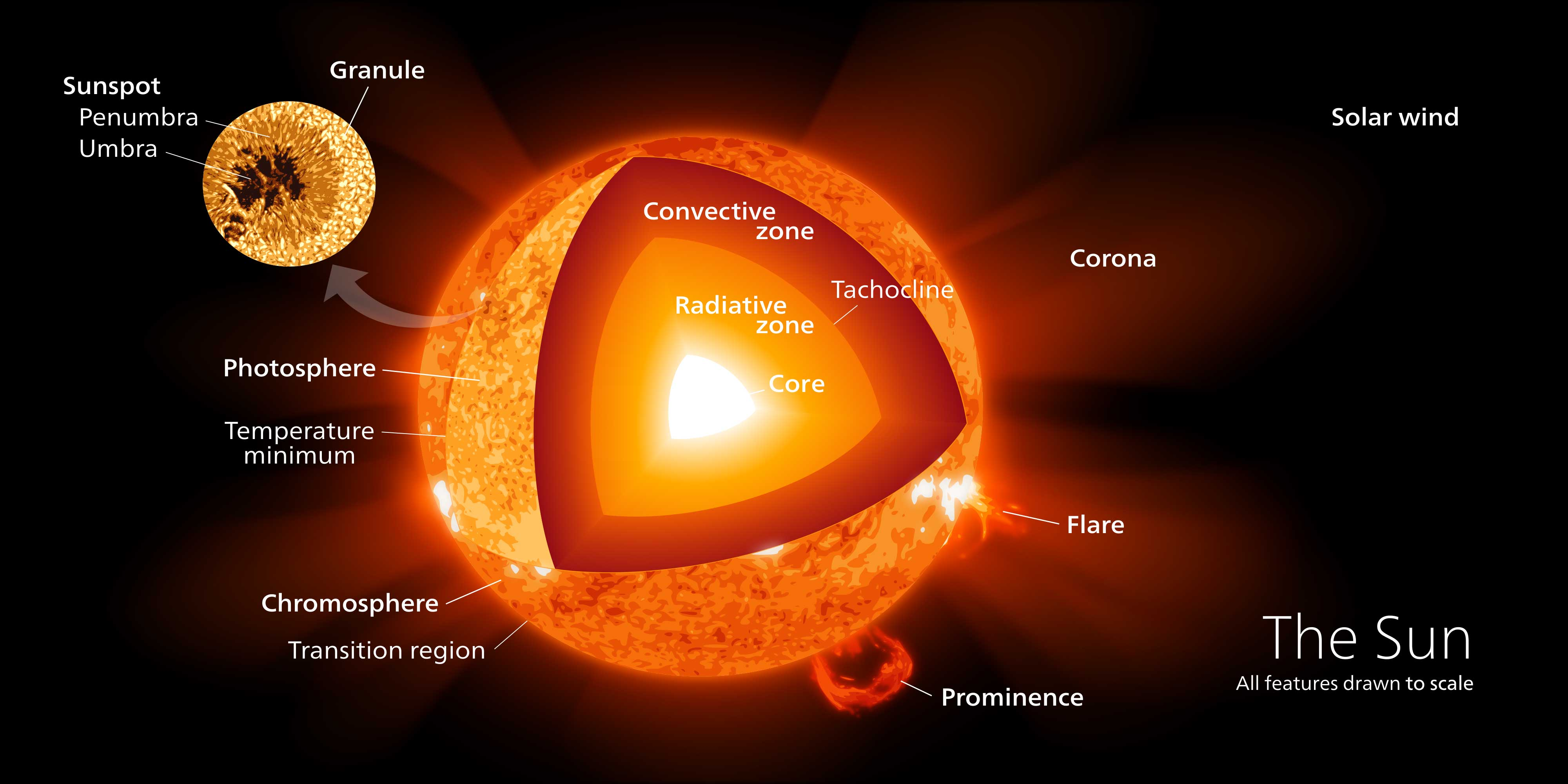 Diagram showing the four major regions of the sun, the connective zone, radiative zone, interface zone, and core.