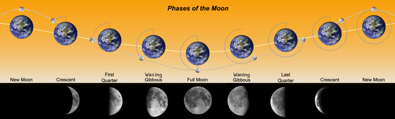 Diagram illustrating various phases of the Moon in their order of appearance starting from the New Moon and progressing through Crescent, First Quarter, and Gibbous to reach the Full Moon. It is followed by Gibbous, Last Quarter and Crescent to complete full circle at the New Moon again. The gray circle around the Earth shows the Moon's orbit. The dotted gray line illustrates moon's trajectory. The solid ivory line passing through the earth is indicative of Earth's orbit around the Sun. Notice that this graphical representation can be misleading, as the Earth & Moon's path around the Sun is actually always concave towards the Sun.