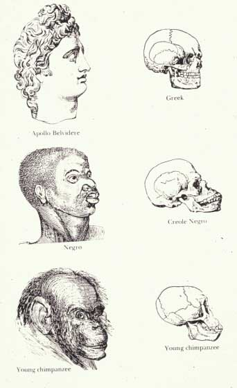Figure 1 shows a drawing of a 'Caucasian' head (labeled Apollo Belvidere' and skull (labeled 'Greek') in profile at the top of the image, in the middle is a 'Negro' head and skull (labeled Creole Negro' in profile, and on the bottom, is a 'young chimpanzee' head and skull in profile.