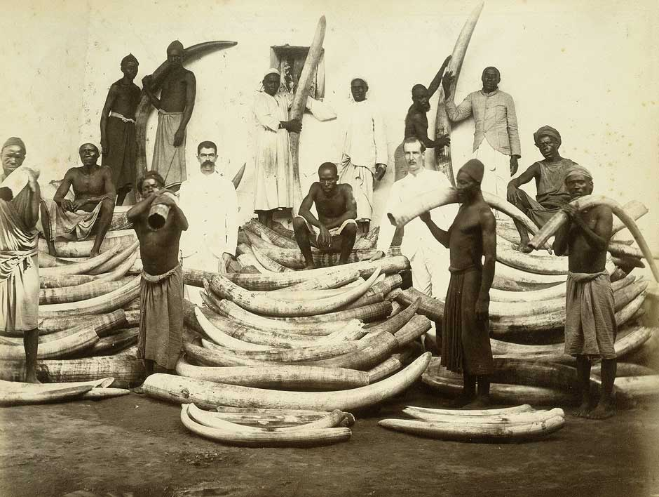 Photo depicting the ivory trade in East Africa in the 1880s or 1890s. There are waist-high piles of elephant tusks with 14 African workers standing or sitting among them.