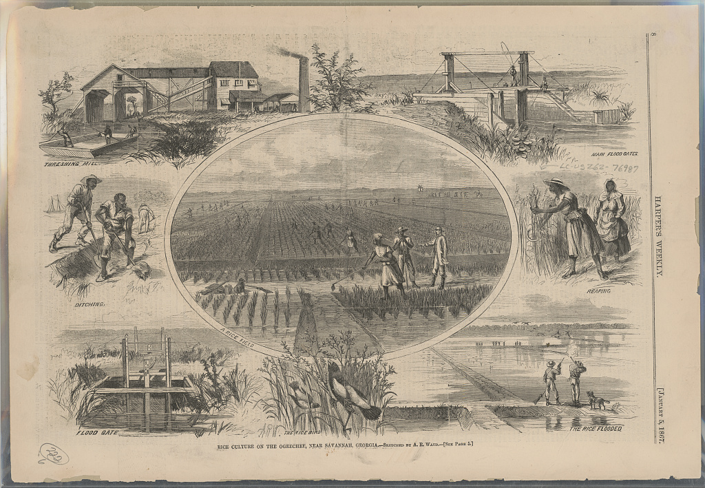 Main illustration shows African Americans working in a rice field being supervised by a white man; vignettes surrounding the main illustration show a threshing mill, flood gates, a flooded rice field, African Americans digging ditches and reaping, and a rice bird.