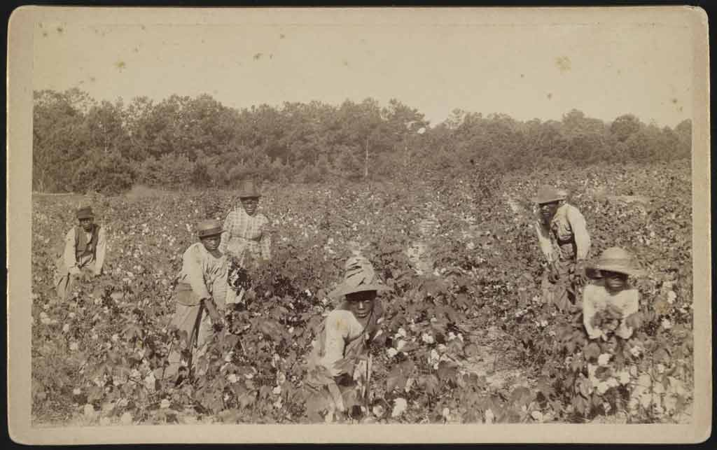 A man, woman, and four young boys pick cotton on a sunny day. Each is wearing long sleeves and a brimmed hat and is carrying a sack over their shoulder.