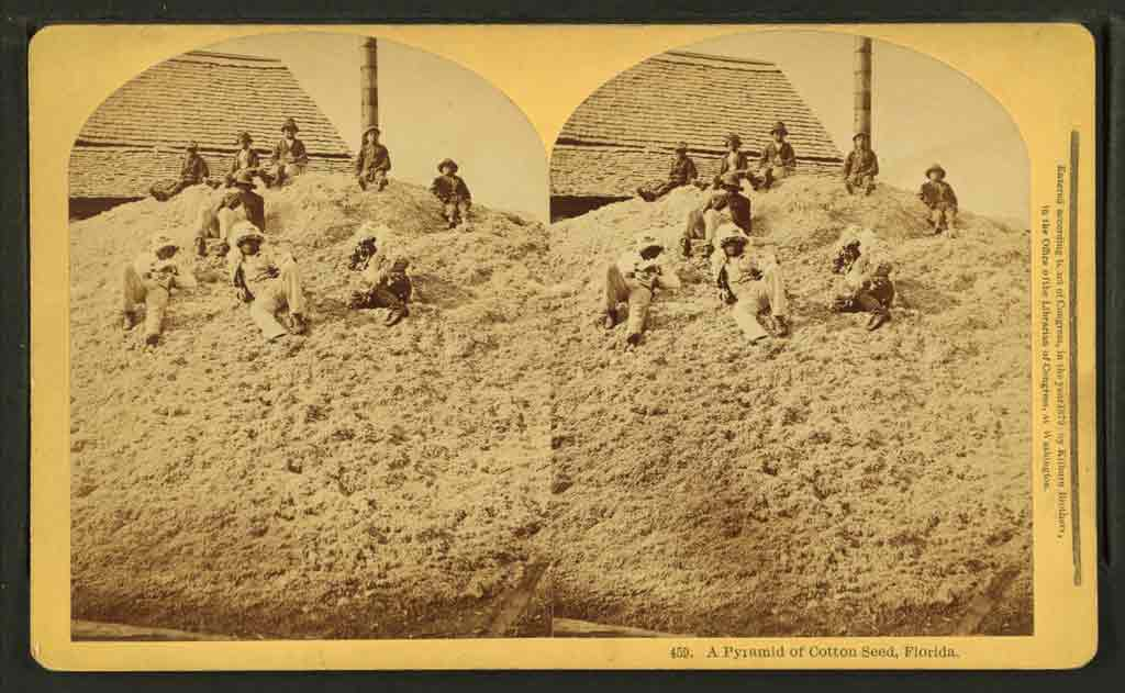 Stereographic image showing nine young African American boys atop a pile of cotton seed. The pile reaches the edge of the roof on the building immediately behind it.