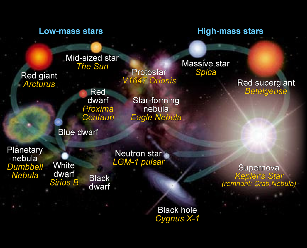 Stellar evolution of low-mass (left cycle) and high-mass (right cycle) stars.