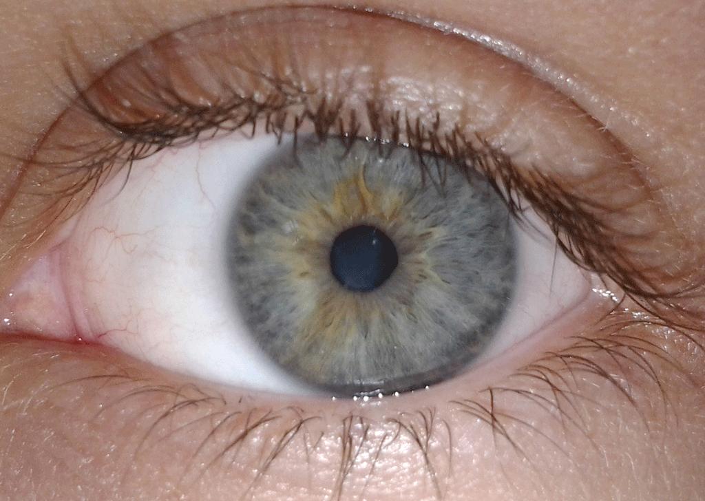 A closeup of a human eye.