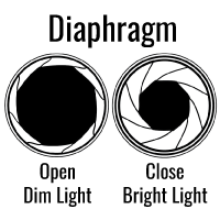 A circle with a small white band around a large black area is on the left; a circle with a larger white band around a smaller black area is on the right.